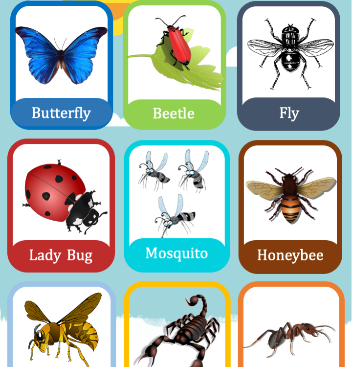 17 Insect Flashcards, 2 Insect  wall posters for Preschool, Kindergarten, Homeschooling