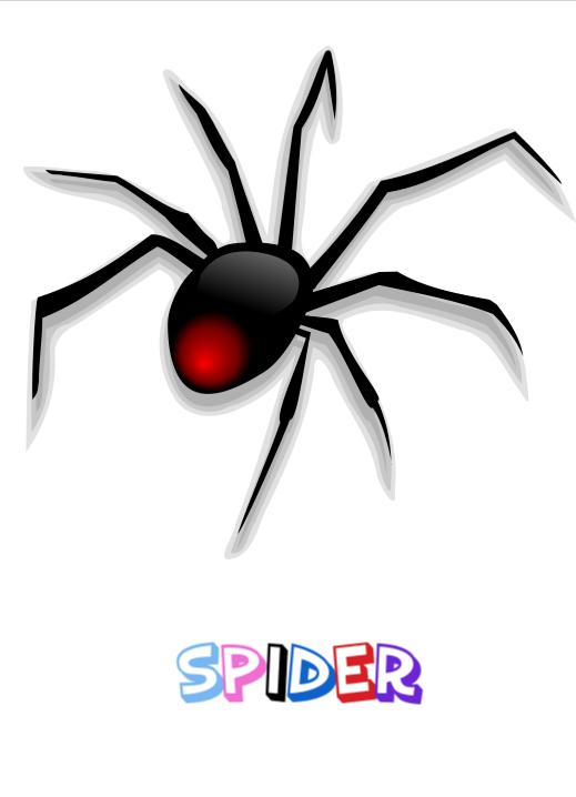 spider flashcard